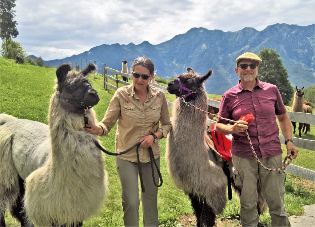 Lama-Trekking Monte Comino, Centovalli, Tessin